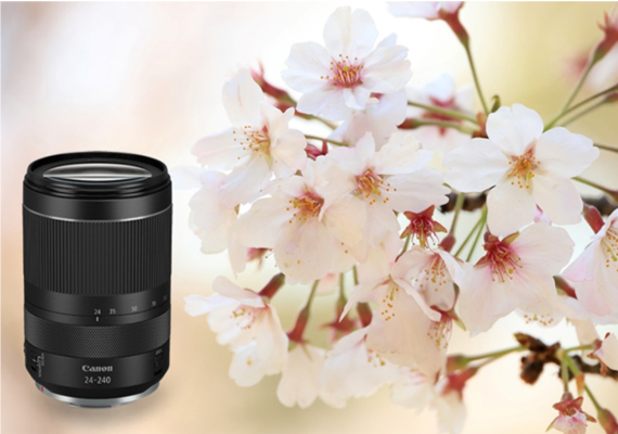 Canon's New RF24-240mm f/4-6.3 IS USM:  The Perfect All-In-One Travel Lens